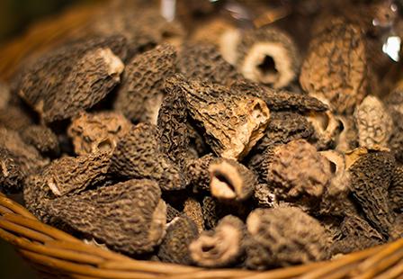 Truffes et champignons sauvages