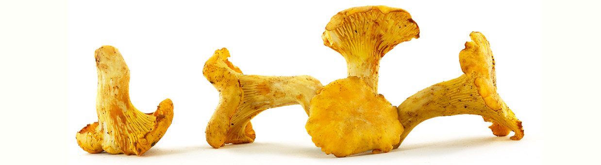 Wild mushrooms : chanterelles