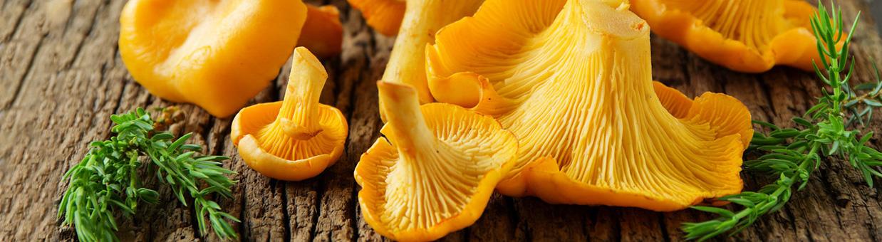 Vente de champignons sauvages